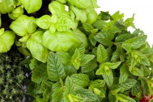 Grove City Gardens | Fresh Produce